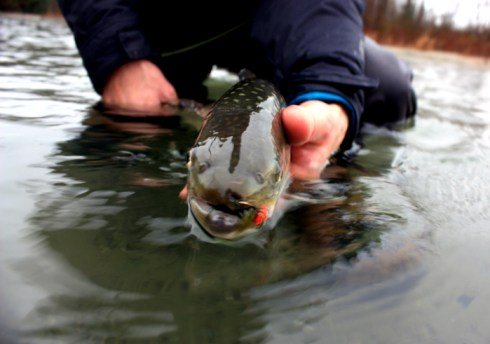 bull trout snout fly fishing