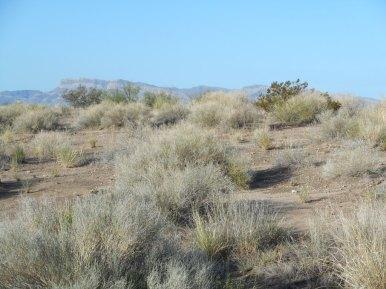 "Fabens TX - 8"", mesa sand scrub"