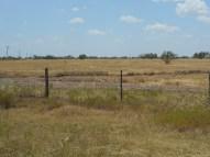 "Ozona TX - 18.5"", steppe, mesquite flats"