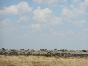 """W of Sonora TX - 20"""", steppe, savannah...I almost expect to see a giraffe, or even a lion taking down a wildebeast out there"""