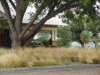 old Texas in a new way...a stately Pecan tree, grasses, yuccas