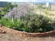 The purple garden
