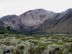 Sage at Convict Lake
