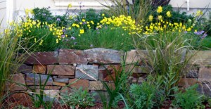 Cabernet Stone Wall with Eschscholzia Lobii