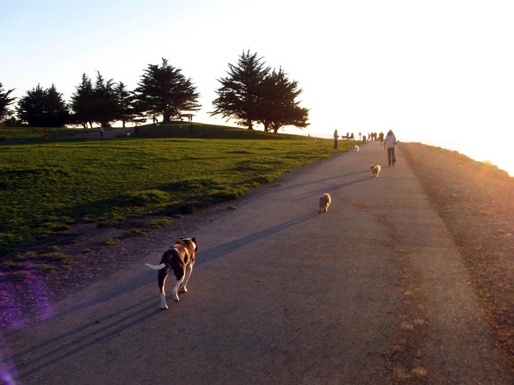 Richmond Park Dog Walking