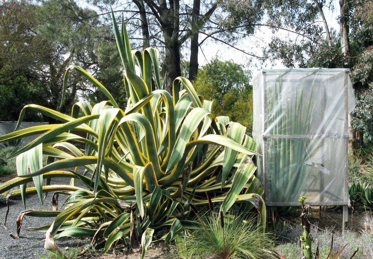 wholesale succulents online