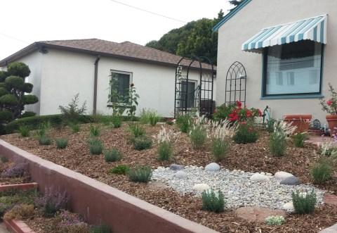 PlantingAfter