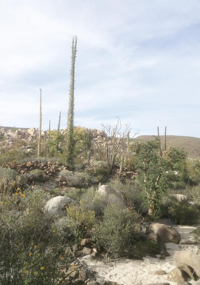 DryStoneGarden » Blog Archive » Cataviña Boulder Gardens
