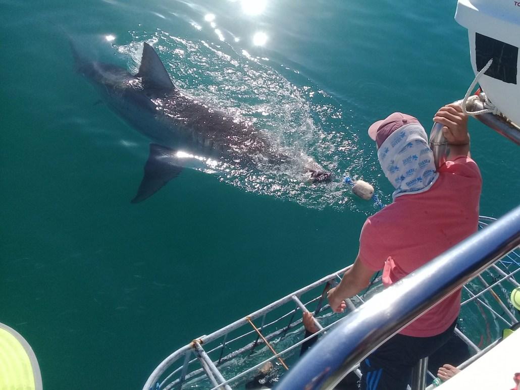 Shark Wisdom Calling You!