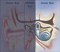 inner ear 2