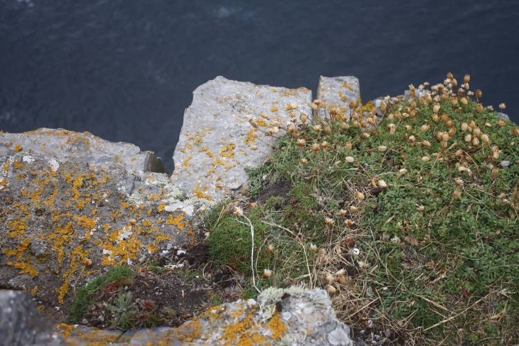 Aerial view of sea cliffs beside Dún Aonghasa, Inis Mór, County Galway