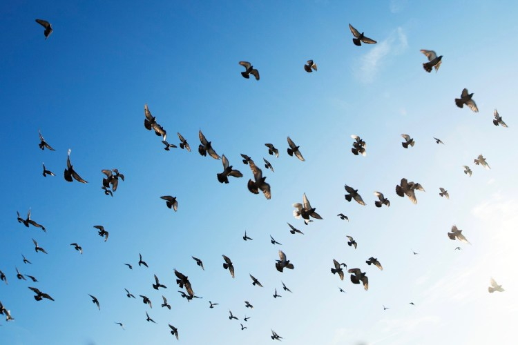 A group of birds flying in the sky