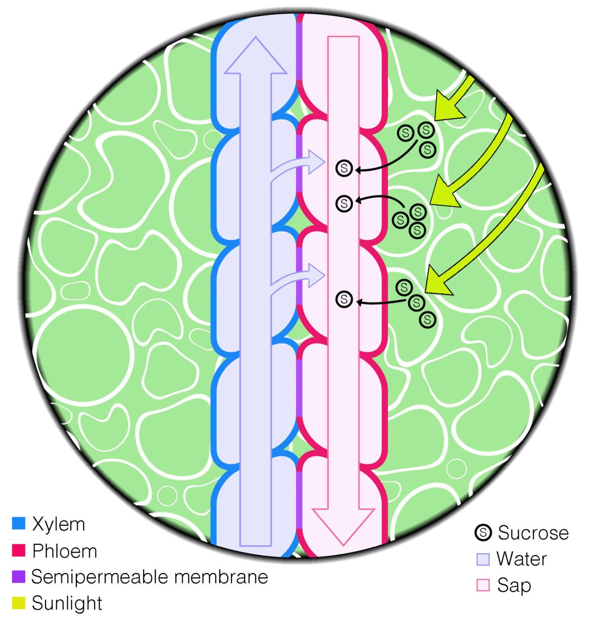 Energy Phloe M I