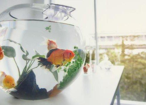 10 Rekomendasi Akuarium Mini Termurah Yang Mempercantik Ruangan Anda 2020
