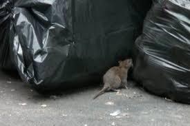 أرقام شركات مكافحةة فئران