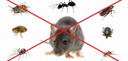 شركة مكافحة الفئران ببريدة