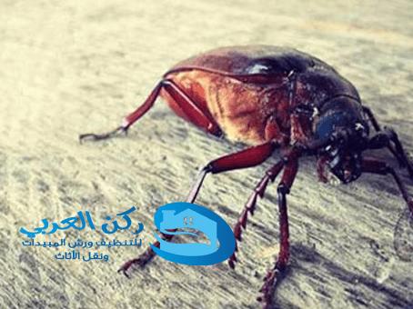 شركة مكافحة الصراصير ببريدة