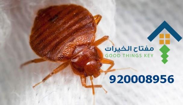 افضل شركة رش البق جنوب الرياض 920008956