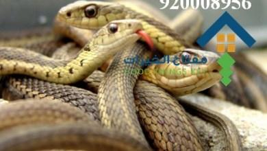 افضل شركة مكافحة الافاعي غرب الرياض 920008956