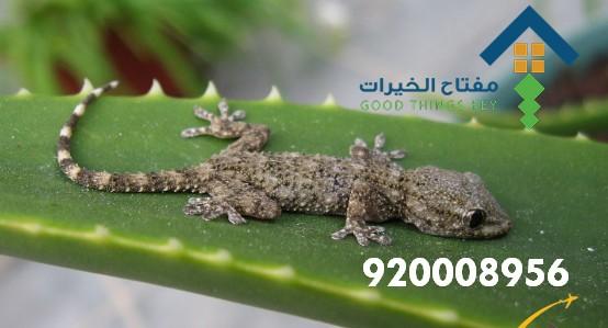 افضل شركة مكافحة البرص جنوب الرياض 920008956