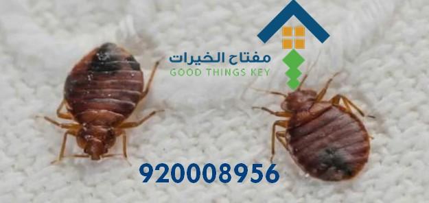 افضل شركة مكافحة البق شرق الرياض 920008956