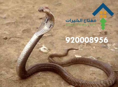 افضل شركة مكافحة الثعابين شرق الرياض 920008956