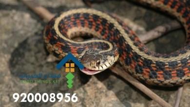 افضل شركة مكافحة الثعابين شمال الرياض 920008956
