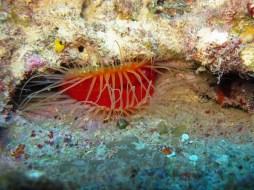 l'arche dans baie du Diamant- DSC club de plongée