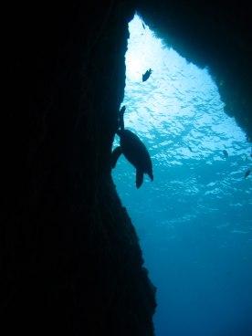 la faille au Rocher du Diamant- DSC club de plongée