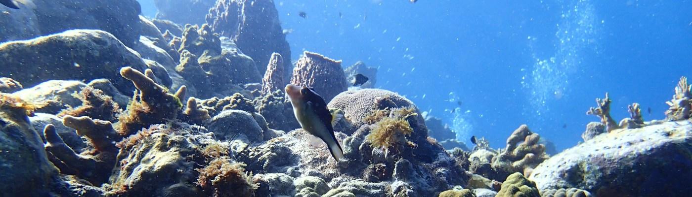 Coraux au rocher du Diamant- DSC club de plongée