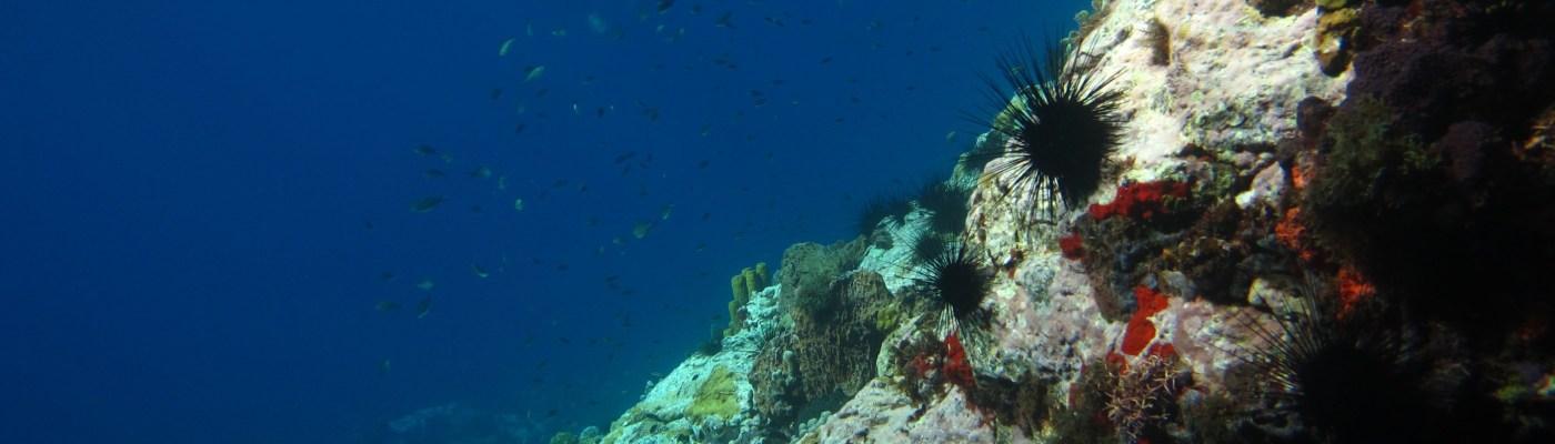 Tombant dans la Baie du Diamant- DSC club de plongée
