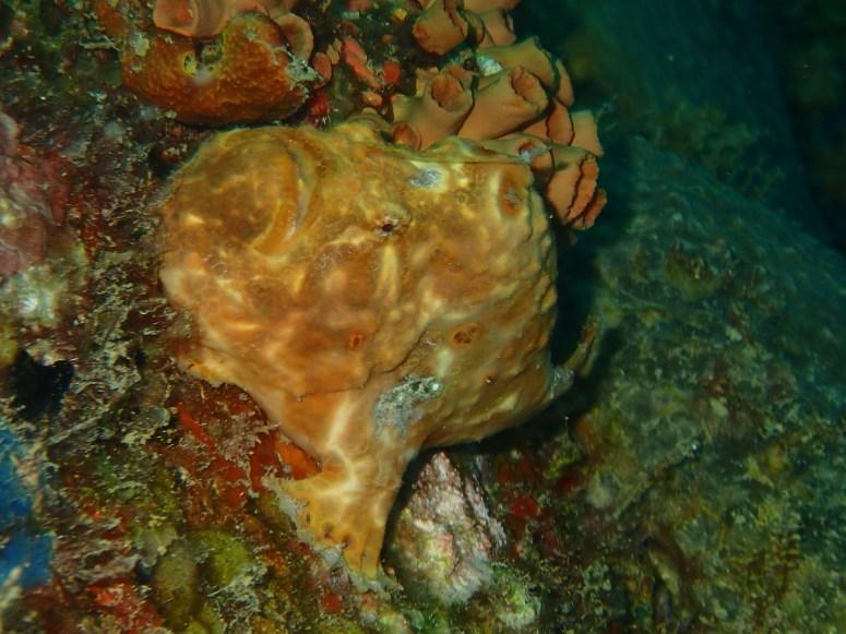 Antenair au Rocher du Diamant- DSC club de plongée