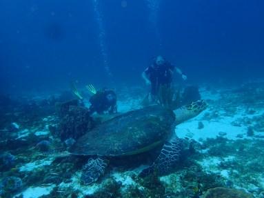 tortue et plongeurs