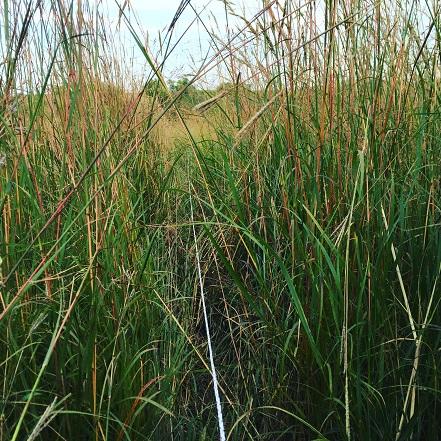 Portable fence through six foot tall grass? - DS Family Farm