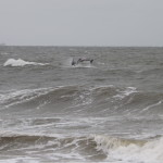 dolphins, the point, cape henlopen state park