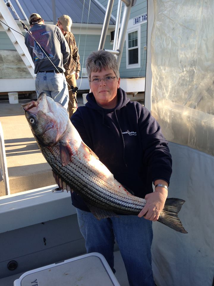 striped bass, bethany lumps, atlantic migratory fish, rockfish, linesider, charter boats in delaware