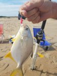 pompano, delaware, sussex coutny, the poit, cape henlopen state paark