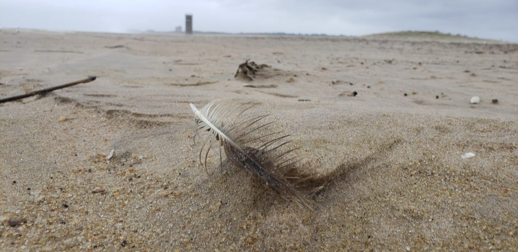 cape henlopen state park, dune making, dune building, wind, feather, fire watch tower, ghost tower, gordons pond, herring point, rehoboth beach