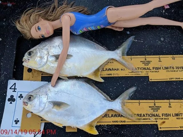 pompano, surf fishing, dealware, summer surf fishing series slam tournament, delaware, sussex county, faithful steward