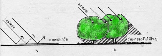 tree-ปลูกต้นไม้ในบ้าน-5