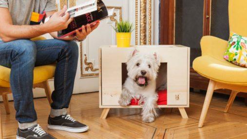 nido-home-doghouse-full-loft-pr-0718-900x506-800x0-c-default