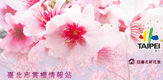 taipei_sakura_01