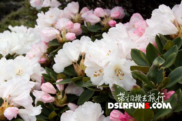 hehuan-du-juan (10)