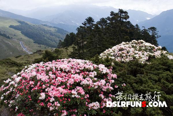 hehuan-du-juan (12)