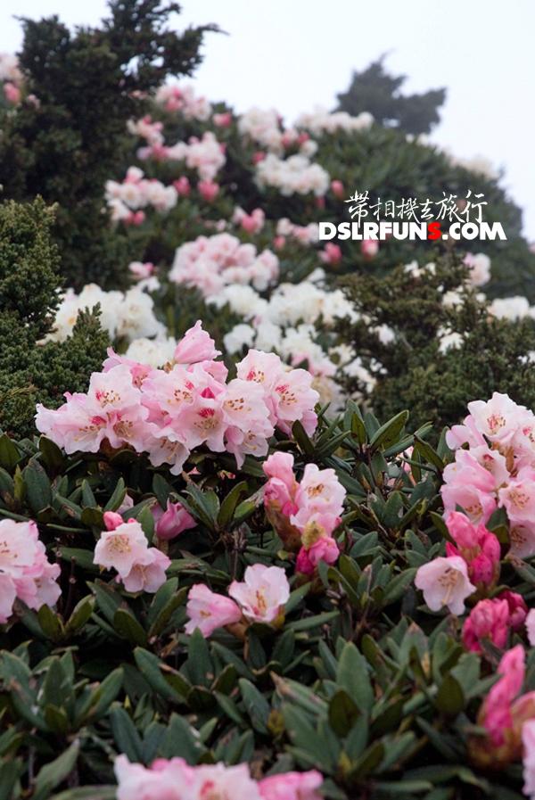 hehuan-du-juan (6)