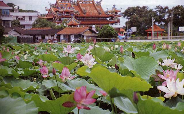 baihe-lotus (10)