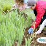 Family Volunteer Opportunities in Des Moines - dsm4kids.com