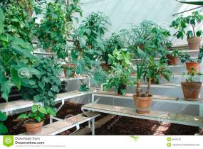 hot-house-plants-benches-9641572