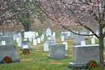 Flowering trees shade headstones that still bear their holiday wreaths.