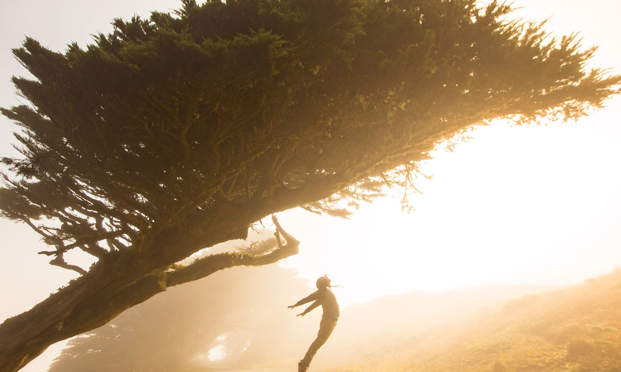 Silhouette of motivated and excited person jumping under tree